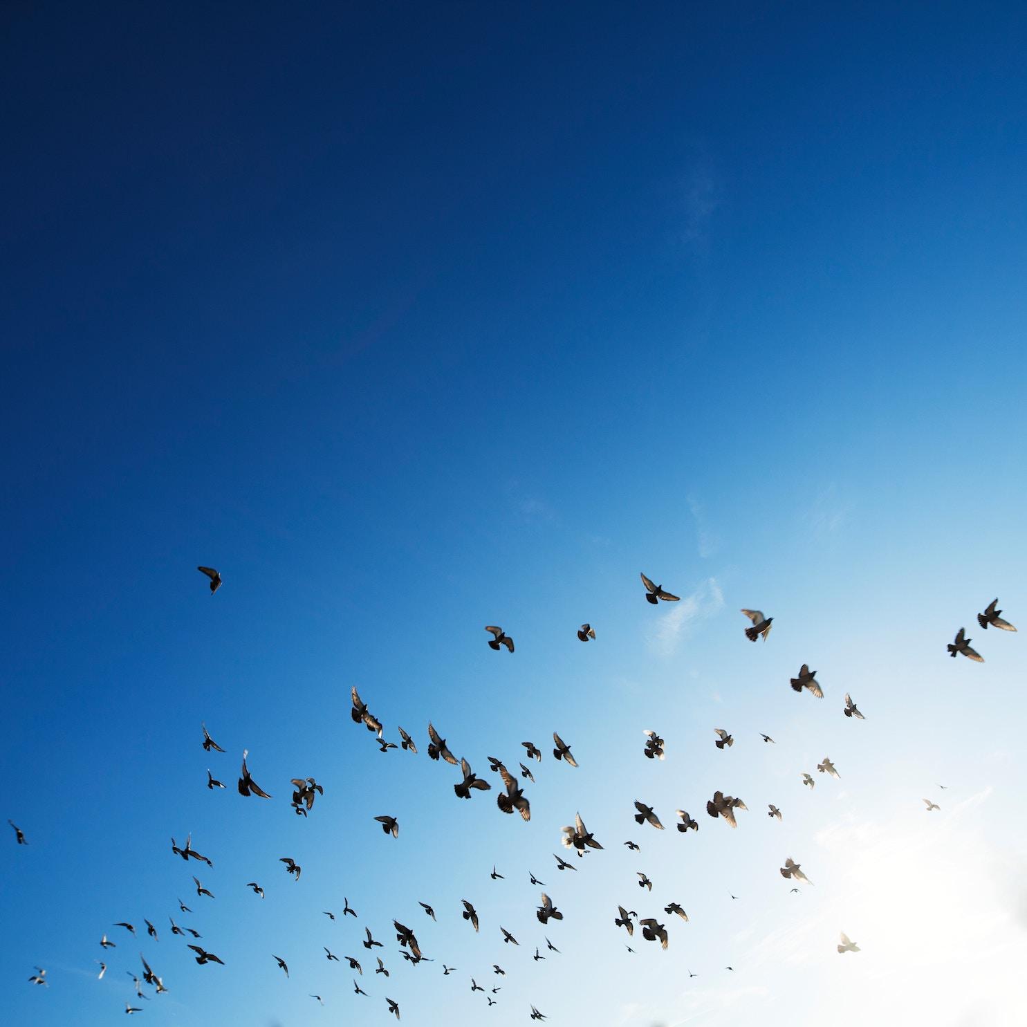 birds flying on a blue sky