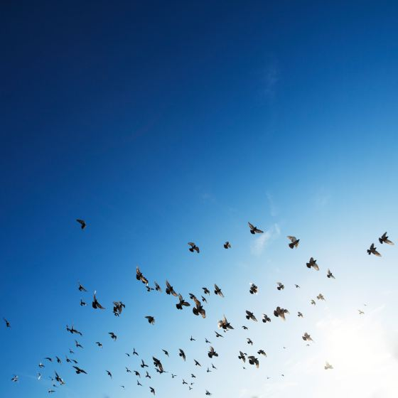 birds flying on a blue sky